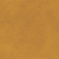 SELVAGGIO-PARCHMENT<br />Please ring <b>0800 999 6706</b> for more details or to order a <b>Free Sample</b>
